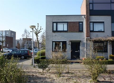 Astilbe 20 , Noordwijkerhout